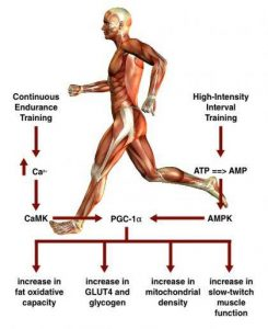 http://lajollatraining.com/wp-content/uploads/2014/05/Science_Of_Interval_Training.jpg